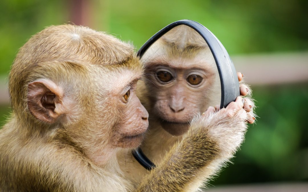 How Do You Conquer Your Pesky Monkey Mind?